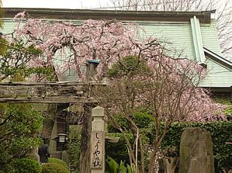 入り口から枝垂れ桜を望